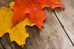 Φύλλα πτώσης φθινοπώρου στο ξύλινο υπόβαθρο Στοκ Εικόνες