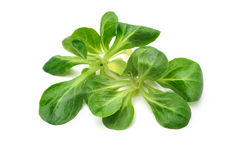 Φύλλα σαλάτας καλαμποκιού στοκ φωτογραφία