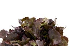 Φύλλα σαλάτας, κόκκινο μαρούλι Romaine μωρών στοκ εικόνες με δικαίωμα ελεύθερης χρήσης