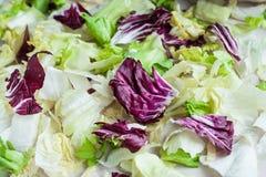 Φύλλα σαλάτας με το παγόβουνο, το μαρούλι romaine και το radicchio ως BA Στοκ εικόνα με δικαίωμα ελεύθερης χρήσης