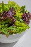 Φύλλα σαλάτας, πορφυρό μαρούλι, σπανάκι, arugula Μικτό φρέσκο sala Στοκ Φωτογραφία