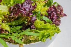 Φύλλα σαλάτας, πορφυρό μαρούλι, σπανάκι, arugula Μικτό φρέσκο sala Στοκ φωτογραφία με δικαίωμα ελεύθερης χρήσης