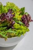 Φύλλα σαλάτας, πορφυρό μαρούλι, σπανάκι, arugula Μικτό φρέσκο sala Στοκ εικόνες με δικαίωμα ελεύθερης χρήσης