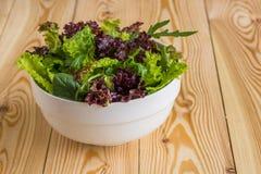 Φύλλα σαλάτας, πορφυρό μαρούλι, σπανάκι, arugula Μικτό φρέσκο sala Στοκ εικόνα με δικαίωμα ελεύθερης χρήσης