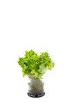 Φύλλα σαλάτας στο γυαλί στοκ φωτογραφία