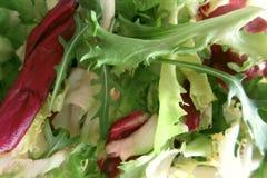 Φύλλα σαλάτας στοκ φωτογραφίες με δικαίωμα ελεύθερης χρήσης