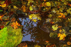Φύλλα σε μια λίμνη στοκ εικόνα με δικαίωμα ελεύθερης χρήσης