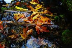 Φύλλα σε μια λίμνη στοκ φωτογραφία με δικαίωμα ελεύθερης χρήσης