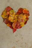 Φύλλα σε μια καρδιά στο σκυρόδεμα, υπόβαθρο Στοκ Εικόνες