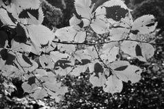 Φύλλα σε Watersmeet, Devon στοκ φωτογραφία