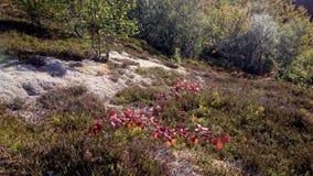 Φύλλα στα δέντρα Στοκ Φωτογραφίες