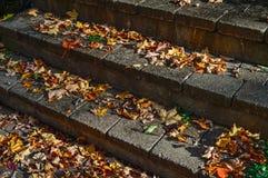 Φύλλα στα βήματα Στοκ Φωτογραφίες