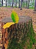 Φύλλα στην εμπλοκή Στοκ Εικόνες