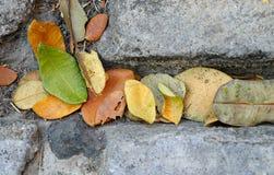 Φύλλα στην πορεία στην Ταϊλάνδη Στοκ Εικόνες