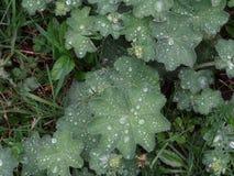Φύλλα στη βροχή Στοκ φωτογραφία με δικαίωμα ελεύθερης χρήσης