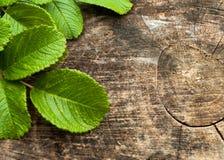 Φύλλα στη φυσική ξύλινη σύσταση με το διάστημα αντιγράφων Στοκ Φωτογραφίες
