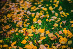 Φύλλα στη χλόη Στοκ εικόνες με δικαίωμα ελεύθερης χρήσης