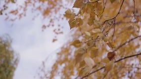 Φύλλα στις κινήσεις θάμνων από τον αέρα απόθεμα βίντεο
