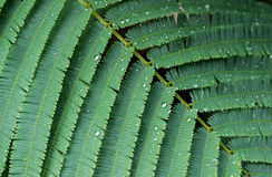 Φύλλα στον κήπο μια βροχερή ημέρα, υπόβαθρο Στοκ Φωτογραφία