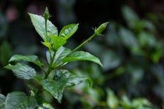 Φύλλα στον κήπο μια βροχερή ημέρα Στοκ φωτογραφίες με δικαίωμα ελεύθερης χρήσης