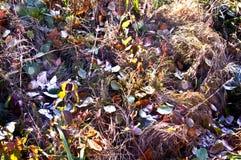 Φύλλα στον ξηρό παγετό χλόης Στοκ φωτογραφία με δικαίωμα ελεύθερης χρήσης