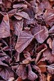 Φύλλα στον πάγο Στοκ εικόνες με δικαίωμα ελεύθερης χρήσης