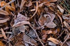 Φύλλα στον πάγο Στοκ εικόνα με δικαίωμα ελεύθερης χρήσης