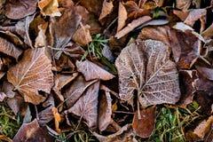 Φύλλα στον πάγο Στοκ φωτογραφία με δικαίωμα ελεύθερης χρήσης
