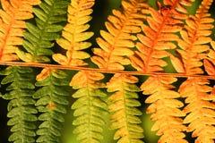 Φύλλα στο δάσος φθινοπώρου στοκ φωτογραφίες