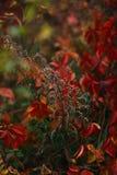 Φύλλα στο δασικό bokeh υπόβαθρο Στοκ Εικόνες