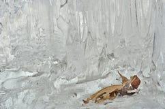 Φύλλα στο λειώνοντας πάγο 11 Στοκ εικόνες με δικαίωμα ελεύθερης χρήσης