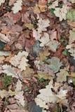 Φύλλα στο επίγειο υπόβαθρο Στοκ Εικόνες
