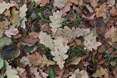 Φύλλα στο επίγειο υπόβαθρο Στοκ Εικόνα