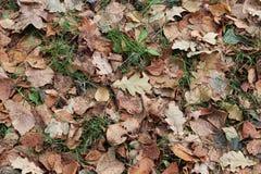 Φύλλα στο επίγειο υπόβαθρο Στοκ Φωτογραφίες