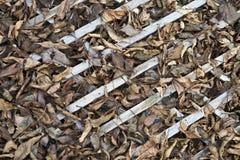 Φύλλα στο δικτυωτό πλέγμα Στοκ Εικόνες
