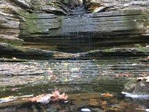 Φύλλα στο νερό Στοκ εικόνες με δικαίωμα ελεύθερης χρήσης
