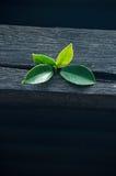 Φύλλα στο παλαιό ξύλο Στοκ εικόνες με δικαίωμα ελεύθερης χρήσης