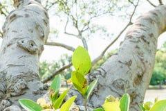 Φύλλα στο στέλεχος του δέντρου στοκ εικόνα