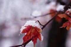 Φύλλα στο χιόνι στοκ εικόνες με δικαίωμα ελεύθερης χρήσης