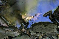 Φύλλα στο ύδωρ Στοκ Φωτογραφίες