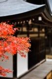 Φύλλα σφενδάμου που βλέπουν μπροστά από έναν ναό στο Takao, Κιότο, Ιαπωνία Στοκ Εικόνες