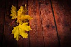 Φύλλα σφενδάμου στο ξύλινο καφετί υπόβαθρο Στοκ εικόνες με δικαίωμα ελεύθερης χρήσης