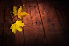 Φύλλα σφενδάμου στο ξύλινο καφετί υπόβαθρο Στοκ Εικόνες