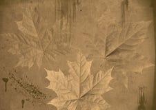 Φύλλα σφενδάμου στο υπόβαθρο grunge Στοκ εικόνα με δικαίωμα ελεύθερης χρήσης
