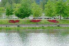 Φύλλα σφενδάμου του Καναδά χλωρίδας που γίνονται από κόκκινο Begonia Στοκ φωτογραφία με δικαίωμα ελεύθερης χρήσης