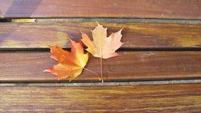 Φύλλα σφενδάμου το φθινόπωρο στοκ εικόνες με δικαίωμα ελεύθερης χρήσης