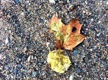 Φύλλα τηγανητών φθινοπώρου πτώσης υποβάθρου Στοκ Εικόνα