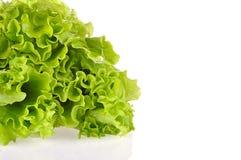 Φύλλα της πράσινης σαλάτας που απομονώνεται σε ένα άσπρο υπόβαθρο Στοκ εικόνα με δικαίωμα ελεύθερης χρήσης