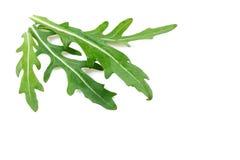 Φύλλα της σαλάτας arugula Στοκ Εικόνες
