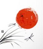 Φύλλα της χλόης, τριών λιβελλουλών και ήλιου Στοκ Φωτογραφία